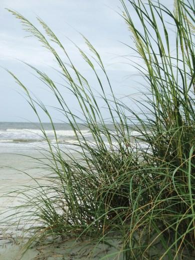 HHI dunes
