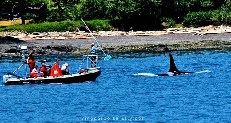 orca researchers