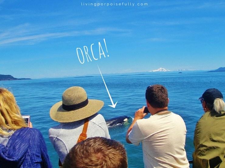 orca right near the boat!