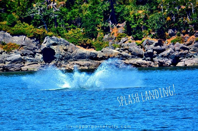 orca splash landing