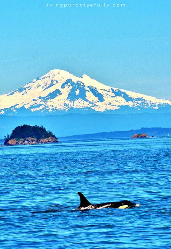 orca with mountain