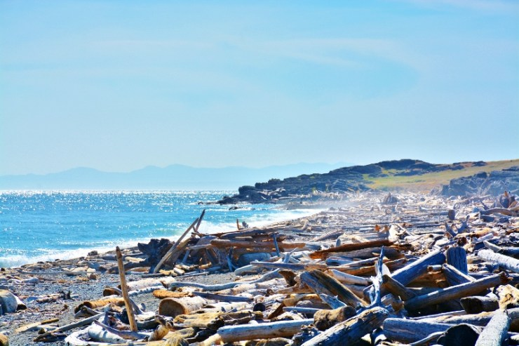 south beach driftwood (2)