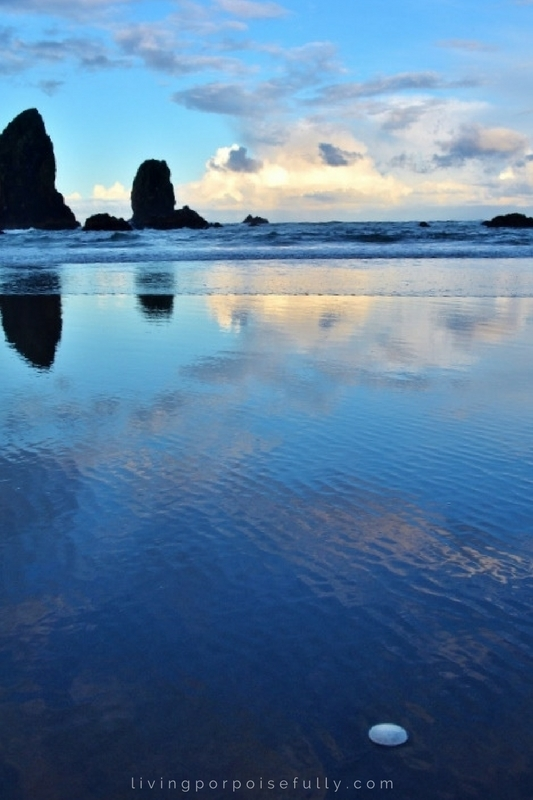 cannon-beach-sand-dollar