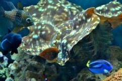 gulfarium-aquarium-800x533