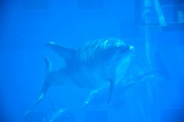gulfarium-dolphins-3-800x533