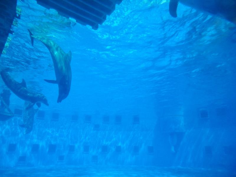 gulfarium-dolphins-4-800x600