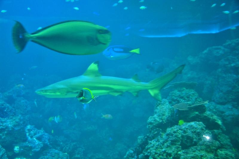 shark-and-reef-aquarium