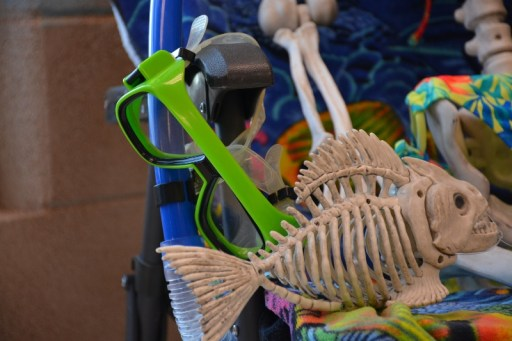 mask-and-snorkel-with-fish-skeleton-800x533