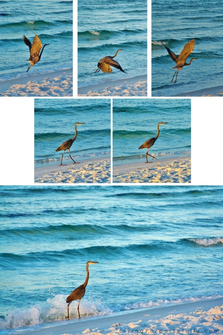 great-blue-heron-collage