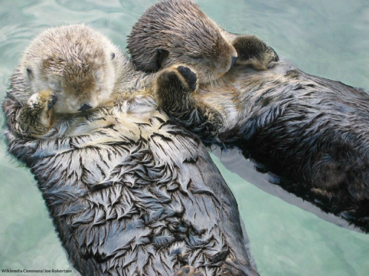 sea_otters_holding_hands_blog-768x576