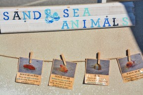 Sand and Sea Animals Display Board 3