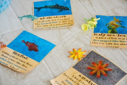 Sand and Sea Animals ID Cards 1