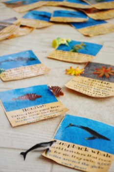 Sand and Sea Animals ID Cards 2