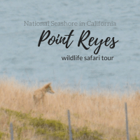 Wildlife Safari in Point Reyes National Seashore (California)