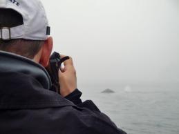 whale photography in Monterey Bay