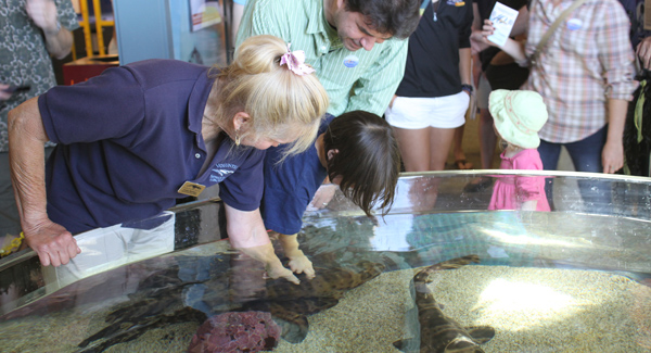 Photo from Seymour Marine Discovery Center website