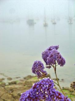 Monterey Bay Marina - foggy morning 2