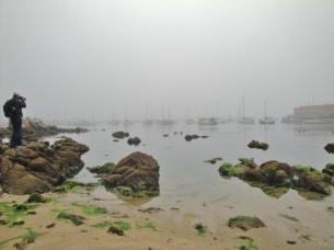 Monterey Bay Marina - foggy morning