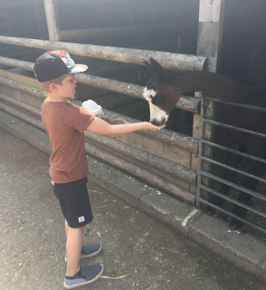 Happy Days: 5 great animal attractions in Southern England. Images of young girl stroking a bunny and a young boy hand feeding a goat