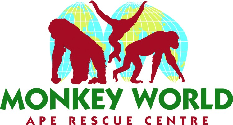Happy Days: 5 Great animal attractions to visit in the south of england. Image of Monkey World Ape Rescue Centre