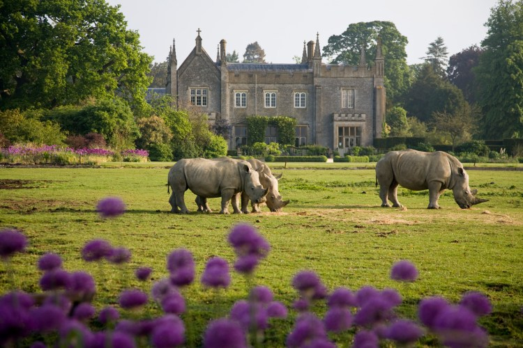 Happy Days: 5 Great animal attractions to visit in Southern England. Image of 3 rhinos walking on grass in front of stately home. Cotswold Wildlife Park