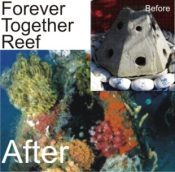 Together Forever Memorial Reef