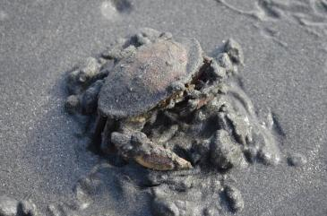 Crabby Crab was Crabby I woke him from his Crab nap!