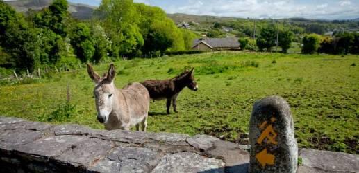 Ahakista Donkeys