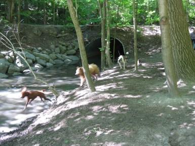 Dogs in Sherwood Park.