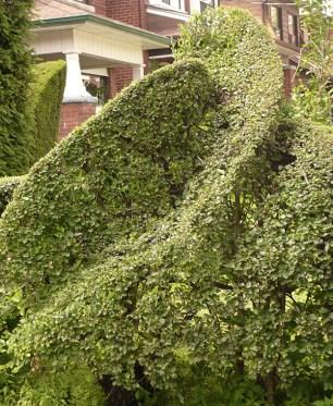 Swirl in the hedge