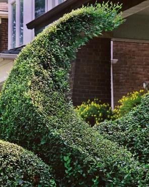 Swoop in the hedge