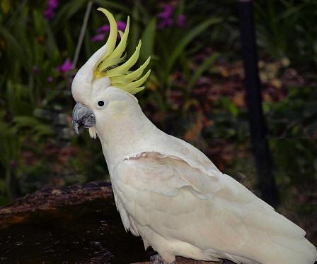 Pics Photos - Bird Birds Australian Bird Australian Birds Frogmouth ...