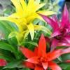 グズマニアの花言葉と育て方【色鮮やかな観葉植物】
