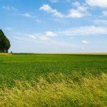 硫安の特徴と使い方【肥料の上手な施し方】