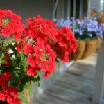 鉢花を購入するときの注意点!