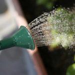 鉢花への「水やり」は環境や季節を考慮してタイミングが大事!