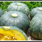 かぼちゃの栄養は美肌をつくる優良野菜【ミネラル・ビタミン・食物繊維の成分値と働き】