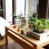 観葉植物の育て方【冬越し気温5℃以上 11種類 紹介】