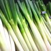 長ネギのもつ栄養の特徴と使い方【ミネラル・ビタミン・食物繊維の成分値と働き】