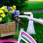 庭の花おすすめ!育てやすい開花時期の違う14種を紹介