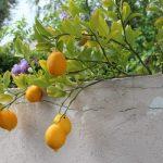 レモンの栄養は健康美容と運動に欠かせない!【効果効能や食べ方を紹介】