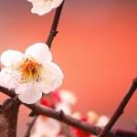 4月1日~4月30日|誕生花と花言葉一覧