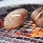 椎茸は健康維持に欠かせない栄養が豊富!