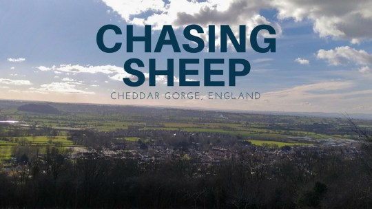 Chasing sheep on Cheddar Gorge cliff top  切達峽谷崖頂散步