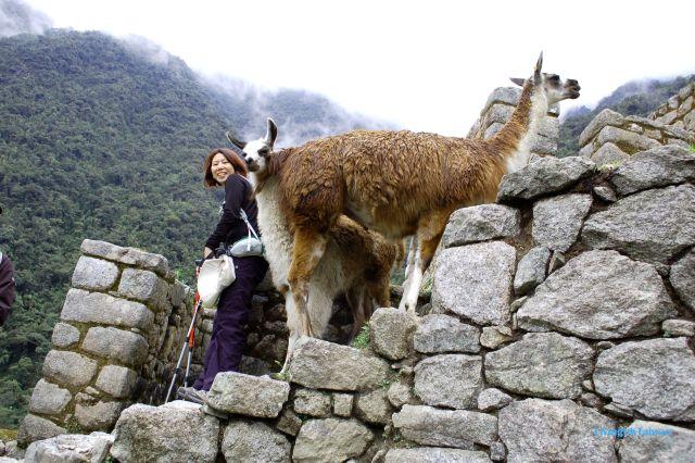 Me and a llama at Macchi Picchu