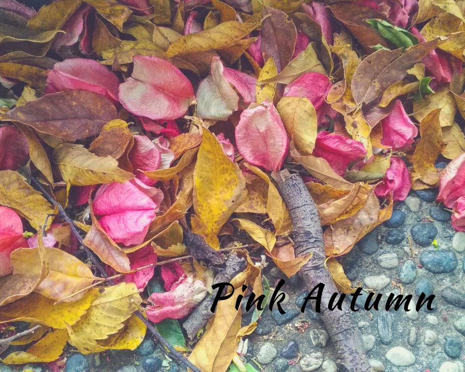 Pink autumn 粉紅的秋天