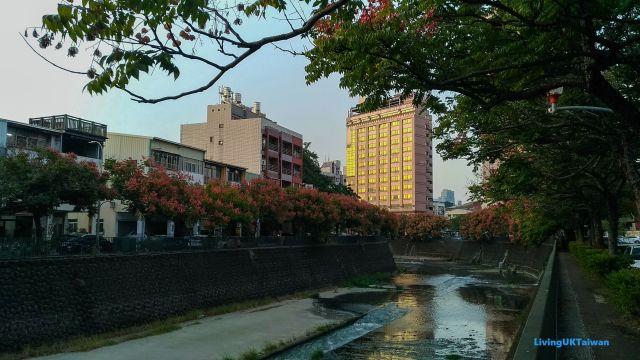Pink autumn walk, Taiwan
