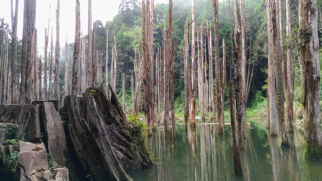 Enchanting Forest in Taiwan