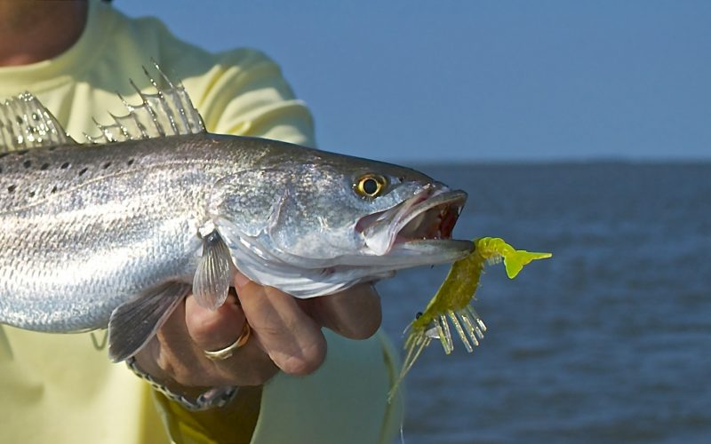 Best Lures Red Fish