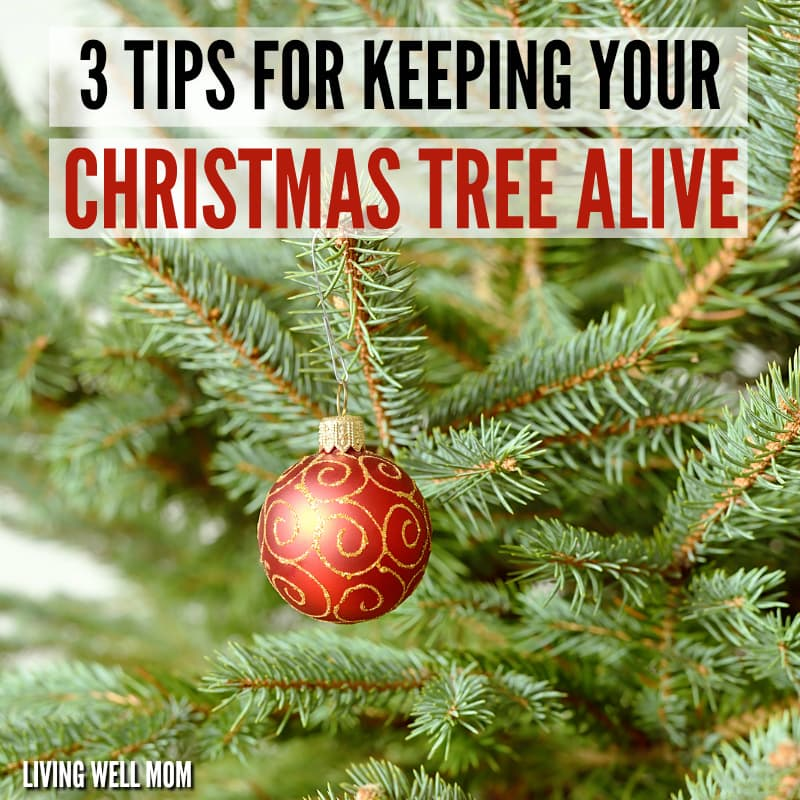 How to Keep Your Christmas Tree Alive - 3 Simple Tips